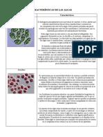 Características de Las Algas. Cuadro Comparativo