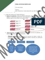 MATERIAL DE ESTUDIO MORFOLOGIA