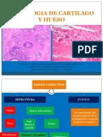 HISTOLOGIA DE CARTILAGO Y HUESO