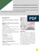 Capítulo II Características Distintivas de la Musculatura Orofacial.pdf