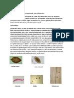 Clase 6 parasitología