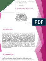 Práctica arquitectura celular y respiración.pptx