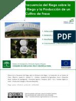 Efecto de la frecuencia del riego sobre la eficiencia del riego y la producción de un cultivo de fresa