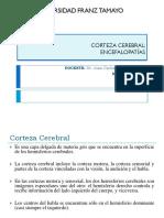 CAP 11 Corteza Cerebral Encefalopatas