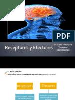 RECEPTORES Y EFECTORES_NEUROANATO CAP 15