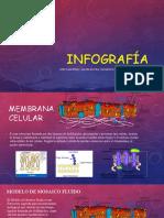 Infografía Membrana Celular
