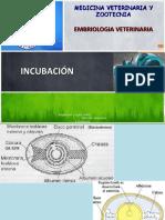 incubacin-110203110503-phpapp02.pdf