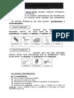 Ficha-Informativa-Animais-Vertebrados-e-Invertebrados 3º ano