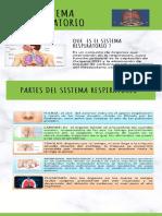 sistema respiratorio y renal INFOGRAFIA.pdf