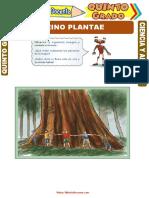 Reino-Plantae-para-Quinto-Grado-de-Primaria