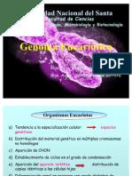 cromosoma_eucariotico