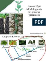 T02 - Morfología.pdf
