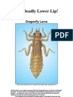 Aquatic Bug Posters - Classroom Study Our Streams