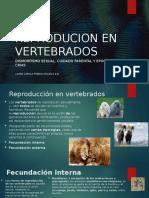 REPRODUCION EN VERTEBRADOS