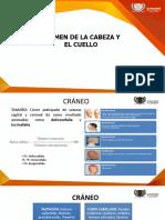 CABEZA Y CUELLO (1)