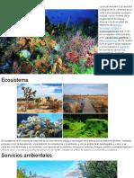 Biodiversidad -  Actividad