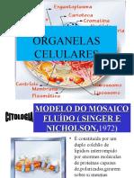 Citologia - organelas2 (1)