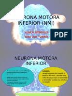 NEURONA MOTORA INFERIOR (NMI)