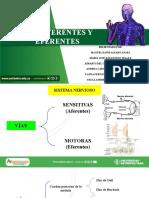 VIAS AFERENTES Y EFERENTES.pdf
