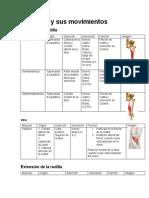 La rodilla y sus movimientos fichas