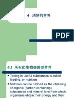 4.动物的营养