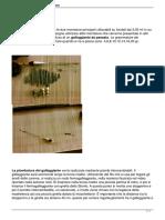 Manuale-gratis-per-le-montature-e-lazione-di-pesca.pdf