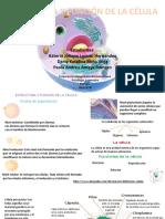 Estructura y función de la célula 2.pptx