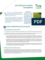 Gestion Integree - Cercosporiose Web
