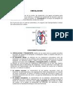 CIRCULACION.doc