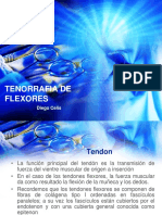 TENORRAFIA DE FLEXORES