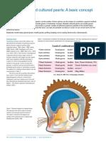 GemExpert-Pearl-basics-Australia.pdf