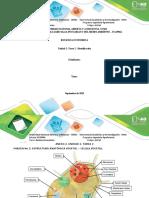 Identificacion_fase 2 botanica economica