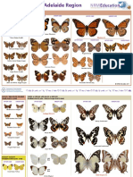 butterflies-adelaide-identification-fact.pdf