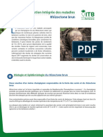 Gestion_integree_-_rhizoctone_brun_web.pdf