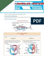 Circulación-en-Animales-Vertebrados-para-Tercer-Grado-de-Secundaria