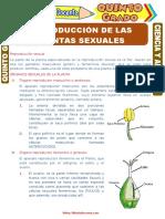 Reproducción-de-las-Plantas-Sexuales-para-Quinto-Grado-de-Primaria