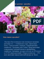 презентация Орхидея
