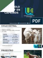 Ciclo-estral-cabra.pptx