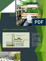 Sistema acuapónico económico y eficiente.pptx