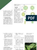 EXCRECION EN PLANTAS GRADO 7.docx2