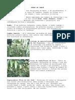 ERVAS DE IANSÃ.pdf