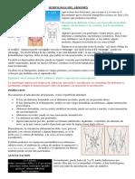 semiologia del abdomen.pdf
