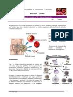 ft-nc2ba-8-_-sistema-imunitario.pdf