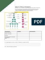 Guía histoembriología Meiosis y sus etapas (2)