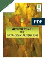 La Taille Des Fruitiers Palissés 4- Les Organes Végétatifs Et de Fructification Des Fruitiers à Pépins