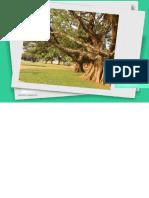 PERFIL SOCIOECONOMICO.pdf