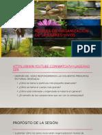 Niveles de organizacion de los seres vivos10163.pptx