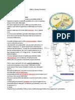 Appunti scienze DNA e Sintesi Proteica