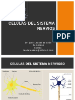 1587077825287_CELULAS DEL SISTEMA NERVIOS.pptx