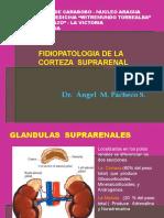 corteza suprarenal